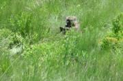 Baboon, baviaan of bobbejaan in Drakensberge, SA