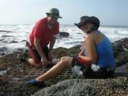 Rocky shores sampling