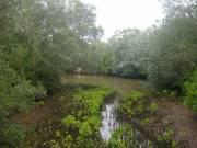Mangroven met krokodillen?