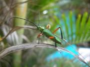 Pretty bug